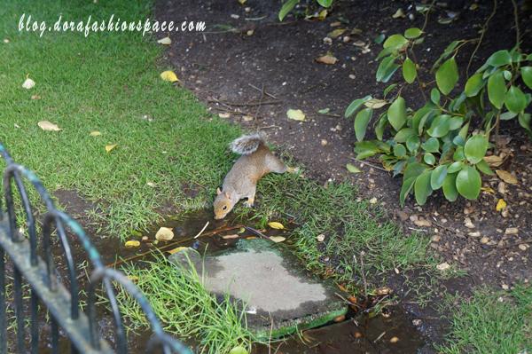 passeggiata a hyde park in mezzo agli scoiattoli