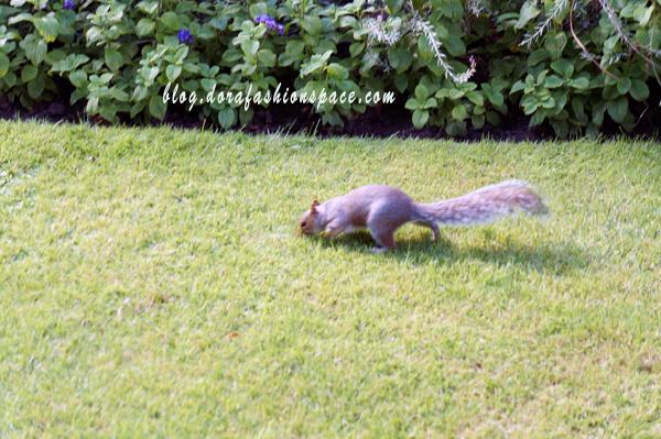 hyde park scoiattoli