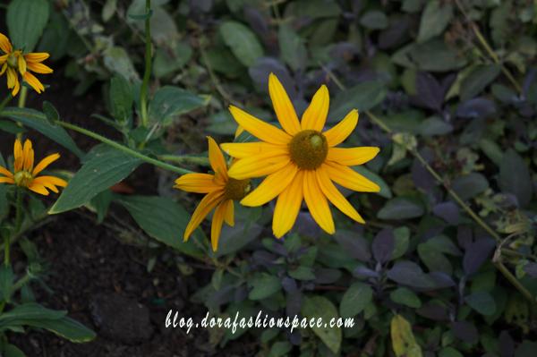 i_fiori_più_belli_di_hyde_park