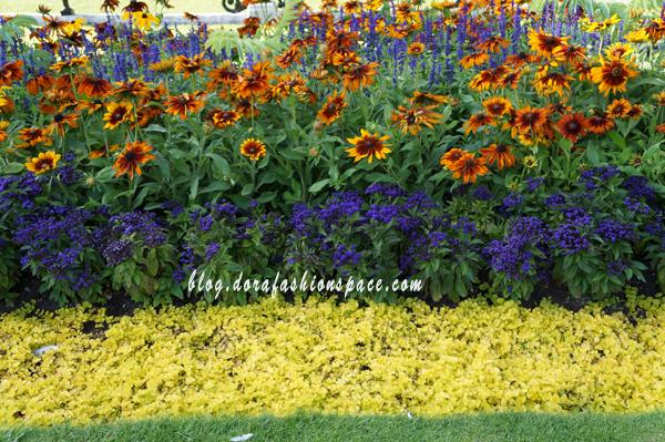 hyde_park_flowers