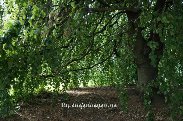 alberi_hyde_park