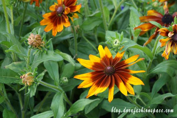 hyde park flower