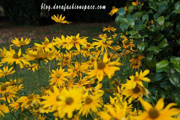 hyde_park_best_flower