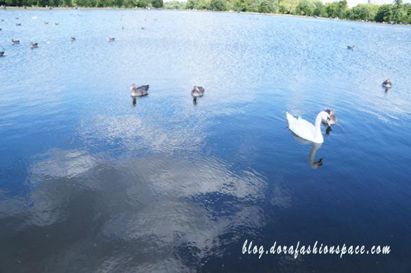 lago hyde park