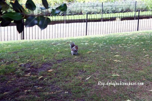 scoiattolo_hyde-park