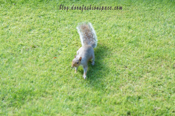 scoiattolo_hyde_park