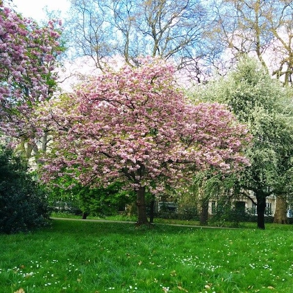 hyde-park-alberi-primavera