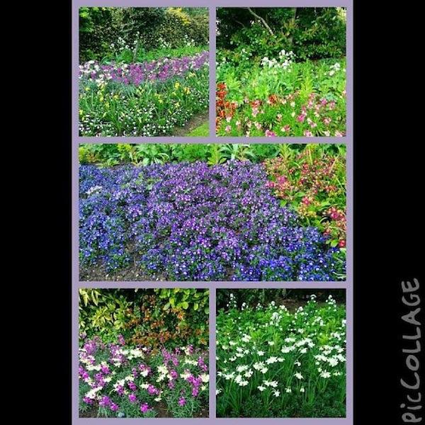 hyde-park-fiori-primavera