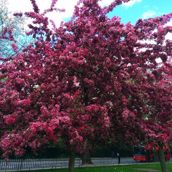 hyde-park-spring-flower