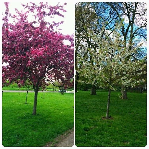 spring-flower-in-hyde-park