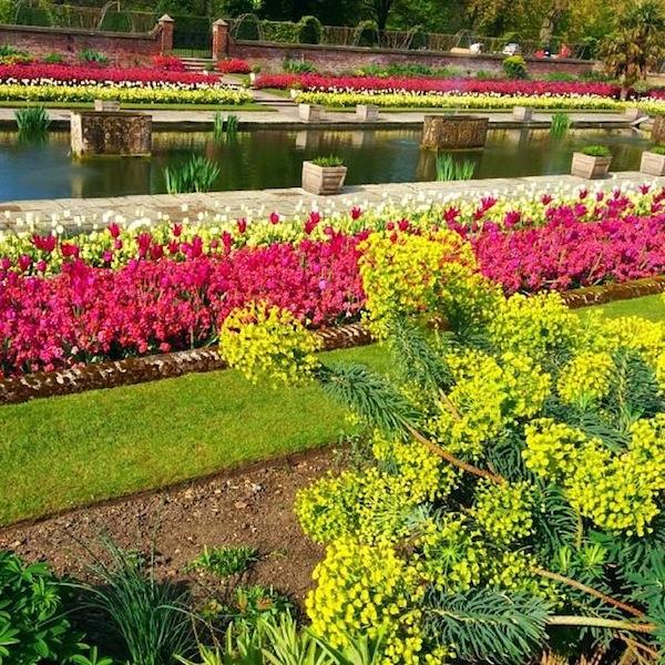 spring-flower-in-kensington-gardens