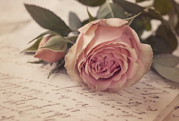 Pink-rose-and-old-letter